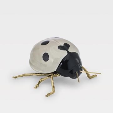 Adorno Albino Ladybird...