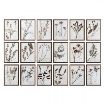 Cuadros Botany - Set de 18