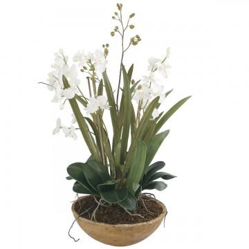 Macetero Moth Orchid